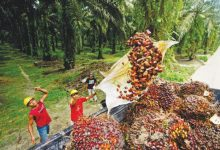 "Photo of ""زيت النخيل"" يشعل حربًا تجارية بين إندونيسيا والاتّحاد الأوروبي"