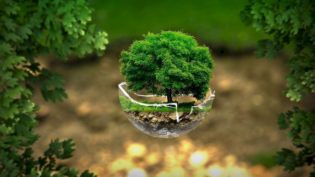صورة رمزية تشير إلى أهمية الحفاظ على البيئة