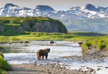 Photo of أميركا تسمح بالتنقيب عن النفط والغاز بمحميّة برّية في آلاسكا