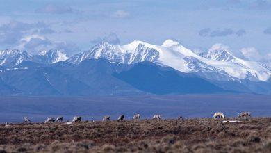 Photo of ألاسكا تقاضي إدارة ترمب لمنع التنقيب عن النفط في القطب الشمالي