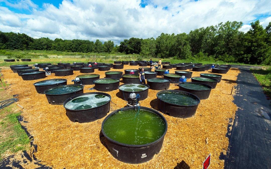 عملية تصنيع الإيثانول من زيت النخيل أو الذرة أو الصويا لاستخدامه في تشغيل السيارات