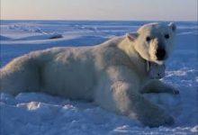 Photo of بنك أوف أميركا يرفض تمويل التنقيب في القطب الشمالي
