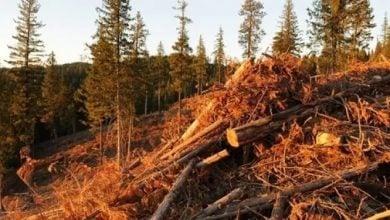 Photo of الأشجار الميتة تُطلق 11 مليار طن من انبعاثات الكربون سنويًا (دراسة)