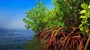 مؤتمر المناخ - أشجار المانغروف