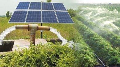 Photo of قطاع الزارعة الأسترالي يُسطر قصص نجاح مشروعات الطاقة المتجددة