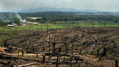 Photo of الحياد الكربوني.. من يدفع تكلفة تحقيقه في البرازيل؟