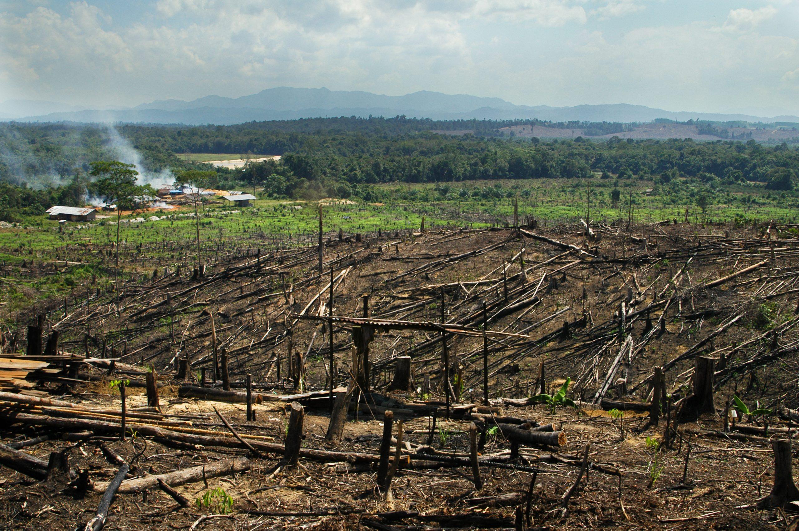 غابات الأمازون - الحياد الكربوني