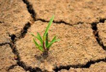 "Photo of ""التربة هي الحل"".. الأمم المتحدة تطرح رؤية لضبط انبعاثات غازات الدفيئة"