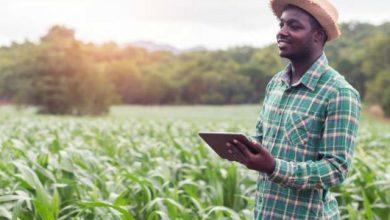 Photo of إثيوبيا.. كهربة قطاع الزراعة تعزّز سبل العيش باستخدام الطاقة النظيفة (تقرير)