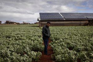صورة لأحد المزارع في سوريا التابعة لمأمون كيبي