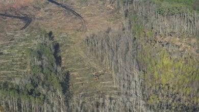 Photo of ثغرة الكربون تهدد غابات الأشجار في أوروبا وأميركا