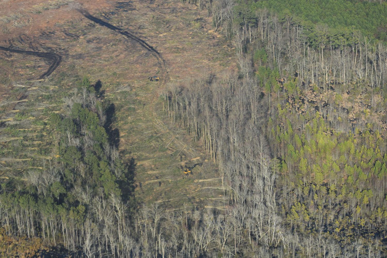 ثغرة الكربون تهدد الغابات