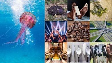 Photo of 10 أشياء غير متوقعة تنتج طاقة نظيفة