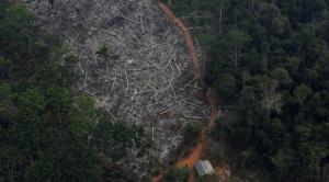 - الاستئصال الجائر للأشجار الحراجية